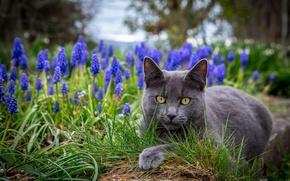 Обои цветы, трава, глаза, кот
