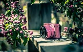 Картинка фон, цвет, фотоаппарат, Nikon