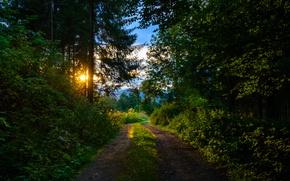 Картинка тропа, утро, Лес, forest, morning, path