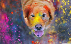Картинка colorful, eyes, dog, dust, color, bokeh, animal, paint, funny, cute, situation, looking up, tongue, nose, …