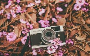 Картинка цветы, камера, лепестки, фотоаппарат, объектив, розовые