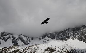Картинка облака, снег, горы, туман, птица, орел, вершины, mountains