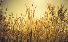 Картинка осень, трава, макро