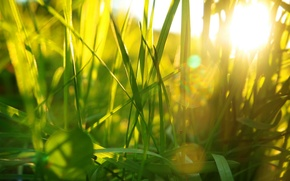 Картинка лето, трава, свет