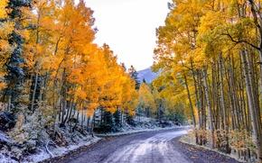 Картинка дорога, осень, лес, небо, листья, деревья, горы, Колорадо, США, осина, Аспен