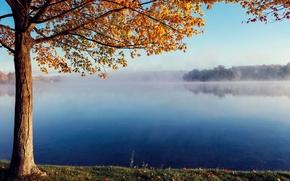 Картинка осень, туман, озеро, дерево, тихо