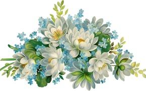 Картинка цветы, белый фон, красивые, голубые цветочки