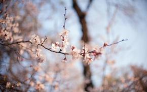 Картинка макро, цветы, весна, цветение, боке