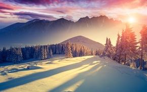 Картинка горы, холод, зима, ёлка, декабрь, тени, ели, свежесть, широкоформатные обои на рабочий стол, солнце, январь, ...