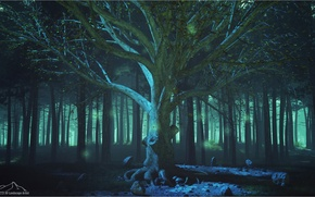 Картинка лес, бабочки, туман, дерево, 3d-графика, 3DLandscapeArtist