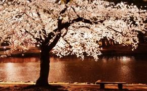 Обои цветы, дерево