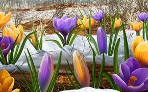 Картинка рисунок, весна, подснежники, первоцвет