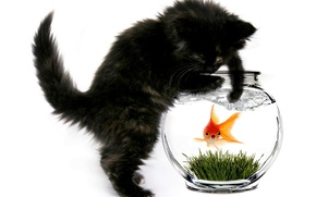 Картинка кошка, кот, аквариум, рыбка, котёнок, золотая