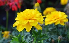 Обои листья, цветы, лепестки, сад, клумба