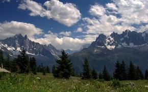 Картинка цветы, луга, Альпы, горы, вершины, лето, облака, небо, трава, лес