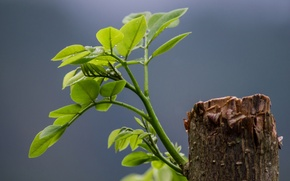 Картинка листья, жизнь, росток