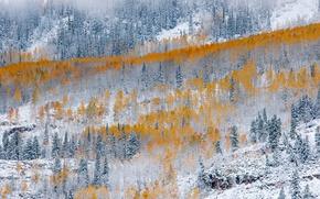 Картинка зима, осень, лес, снег, природа, краски