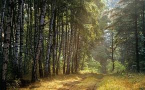 Картинка Дорога, Деревья, Лес, Лучи, Березы