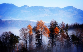 Картинка осень, лес, деревья, горы, туман