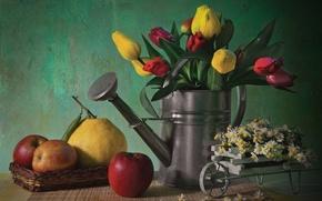 Картинка colorful, flower, nature, life, flowers, tulips, still