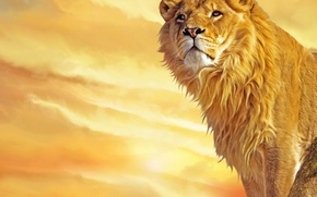Обои грива, желтый, Лев, царь зверей