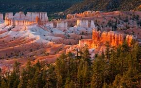 Обои деревья, закат, горы, скалы, Юта, США, Bryce Canyon National Park