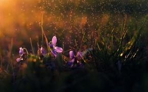 Обои цветы, дождь, утро