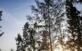 Картинка relax, light, happy, trees, evening, scenery, spirit, hope, malaysia, splendid, kuantan