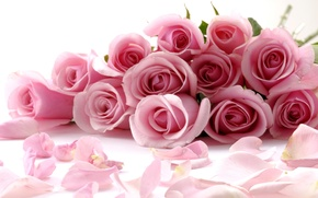 Картинка Pink, Rose, Romantic