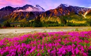 Картинка небо, облака, цветы, горы