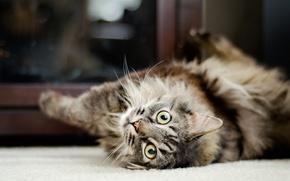 Картинка кошка, кот, животное, любимец