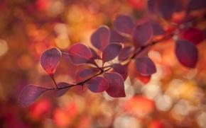 Обои макро, веточка, паутина, природа, листья