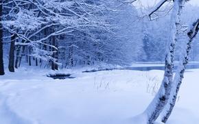 Картинка зима, лес, снег, деревья, пруд, ручей