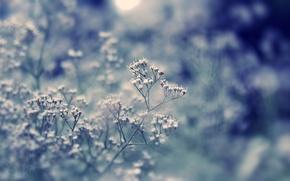 Картинка поле, трава, макро, свет, блики, растение, день, цветочки, боке