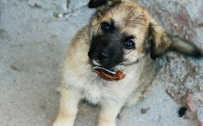 Картинка глаза, улица, собака, щенок, ошейник