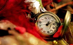 Картинка цветок, листья, часы, перья, ромашка, красные, карманные