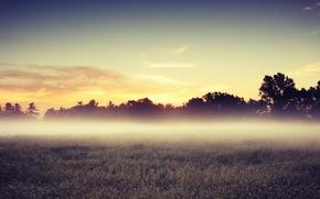 Картинка поле, деревья, утро