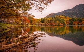 Картинка осень, деревья, горы, мост, озеро, парк, Япония, Nikko