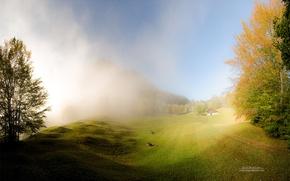 Картинка trees, nature, fog