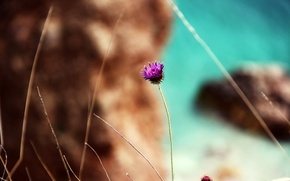 Картинка море, пляж, цветок, природа, скала