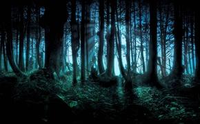 Картинка лес, деревья, ночь