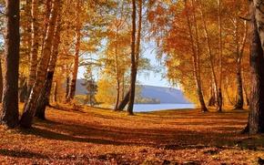 Картинка осень, деревья, озеро, листопад, краски осени