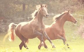 Обои бег, трава, лошади, ограда