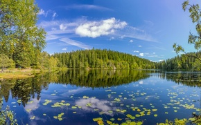 Картинка лес, лето, деревья, озеро, отражение, Норвегия, Norway, Oslo County, Skjennungen Lake