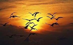 Картинка широкоэкранные, HD wallpapers, обои, чайка, птички, свобода, птицы, полноэкранные, взмах, солнце, background, fullscreen, простор, чайки, ...