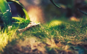 Картинка зелень, трава, макро, nature, hq wallpaper