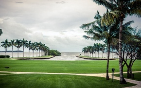 Картинка небо, трава, зеленый, пальма, пальмы, океан, green, волна, grass, сша, sky, ocean, cloud, usa, florida, ...