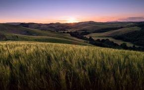 Картинка поле, пейзаж, закат, Tuscany, Volterra