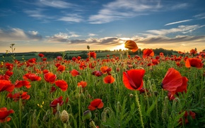 Картинка поле, небо, облака, цветы, холмы, маки, вечер, луг