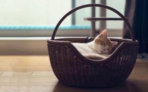 Картинка кошка, корзина, torode